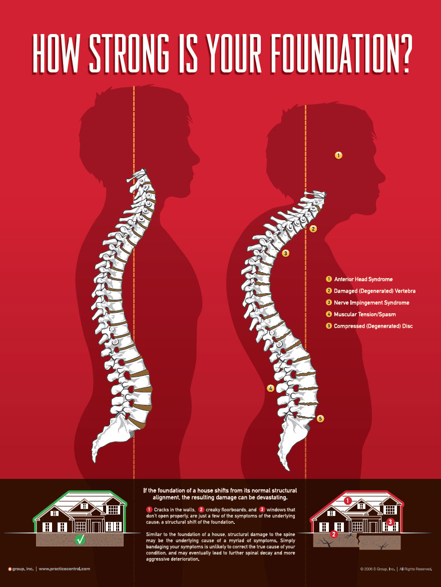 Human Body Spinal Foundation